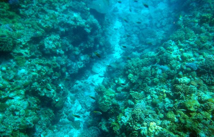 水納島の海の中