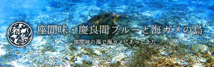 座間味島で海ガメに会う
