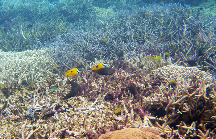 西表島 珊瑚と熱帯魚