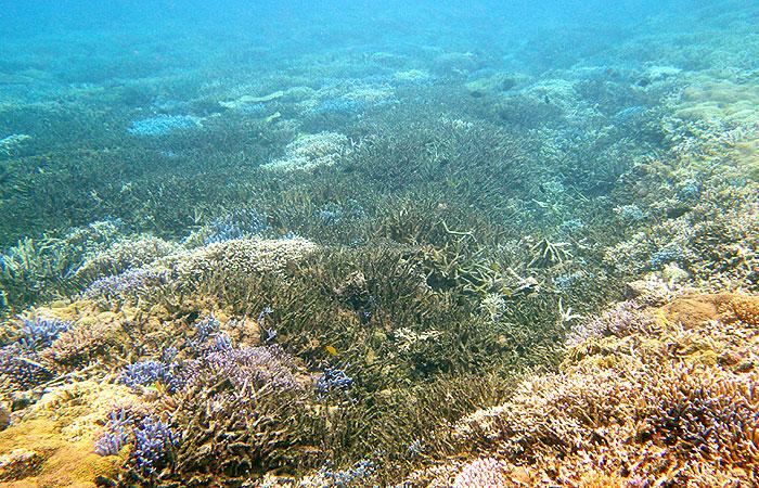 西表島 珊瑚礁