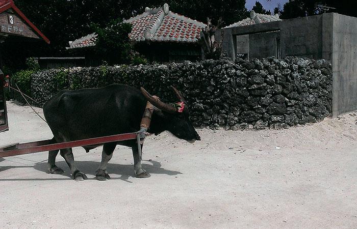 竹富島 水牛車