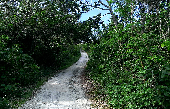 竹富島 アイヤル浜への道