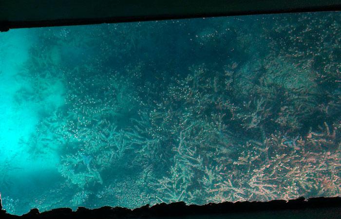 川平湾グラスボート 珊瑚