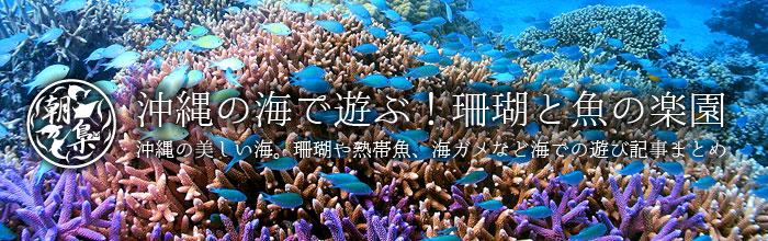 沖縄の海関連記事
