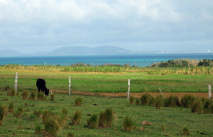 小浜島の草原