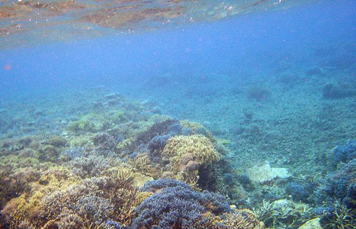 西表島 マリウド海人ツアー シュノーケル