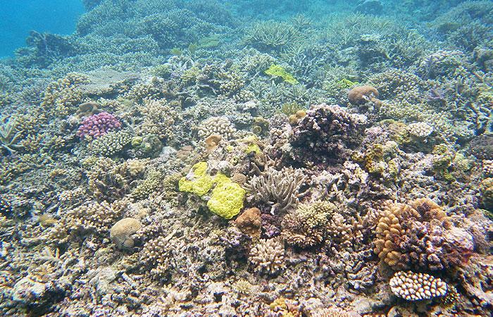 網取の珊瑚