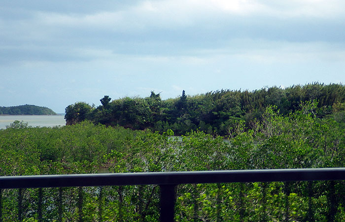 西表島 マングローブ