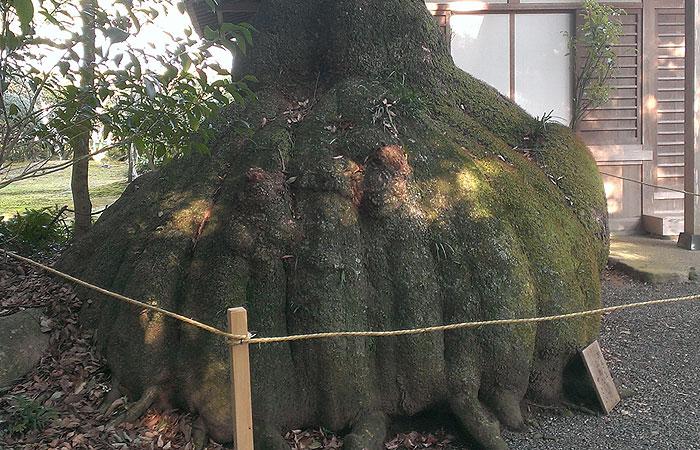 伊雑宮 神木
