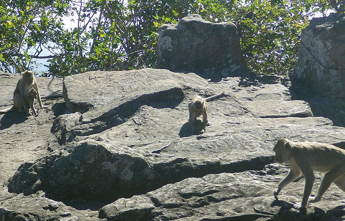 プレアビヒア 猿
