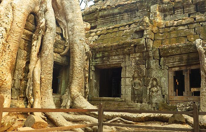 タプローム遺跡の木