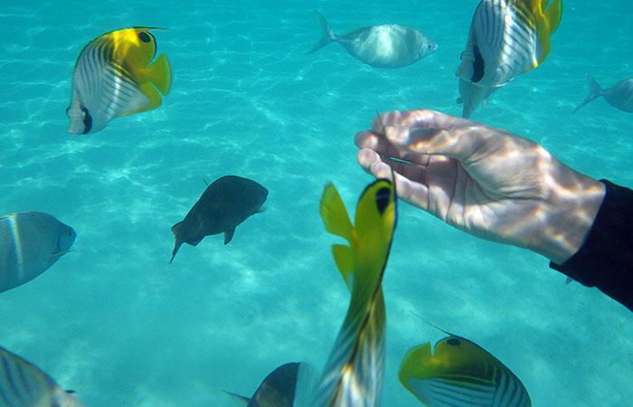 阿波連ビーチ 熱帯魚