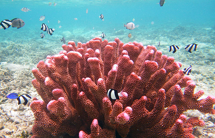 珊瑚と熱帯魚
