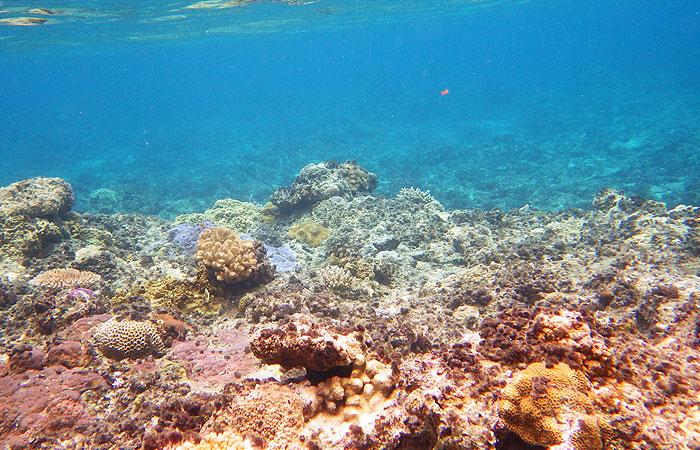 ニシバマビーチの珊瑚