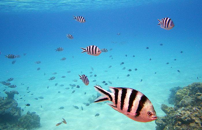 ニシバマビーチ 魚の群れ