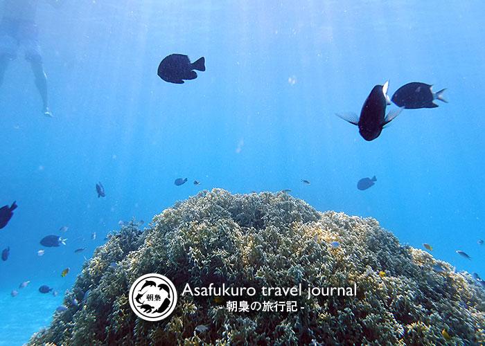 沖縄 古座間味ビーチ