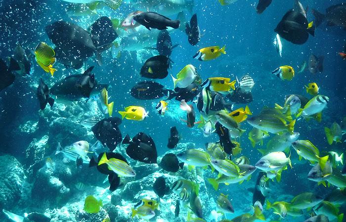 熱帯魚の海 餌