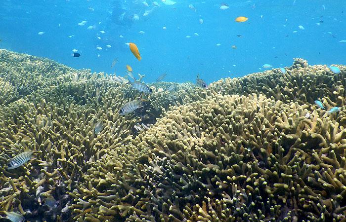 はての浜ツアー 珊瑚と熱帯魚